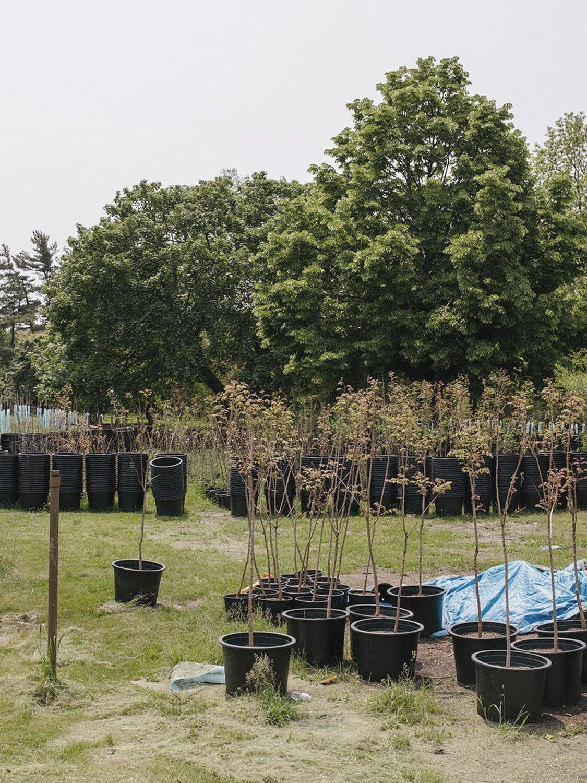 The Greening's Impact
